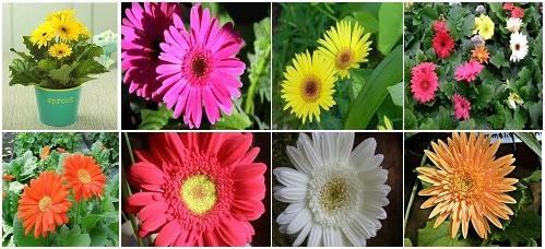 Utilidad de las plantas for Caracteristicas de las plantas ornamentales
